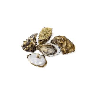 Schaal en schelpdieren